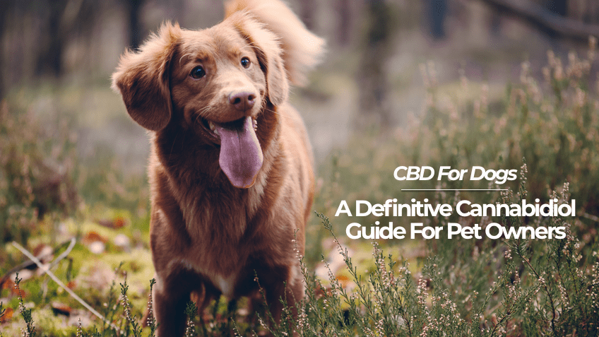 A Definitive Cannabidiol Guide For Pet Owners