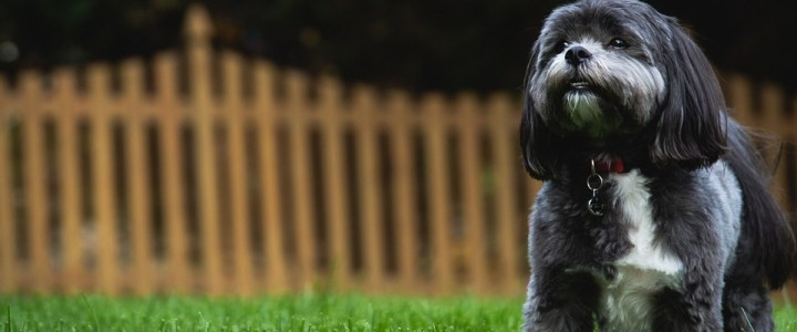 How to Pick the Best Wireless Dog Fence