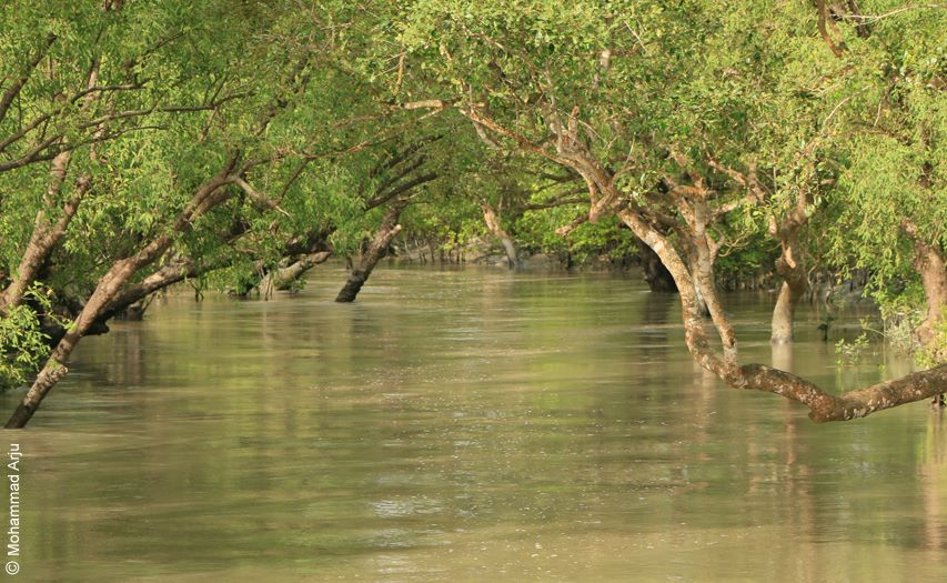 The flying crabs of Sundarban