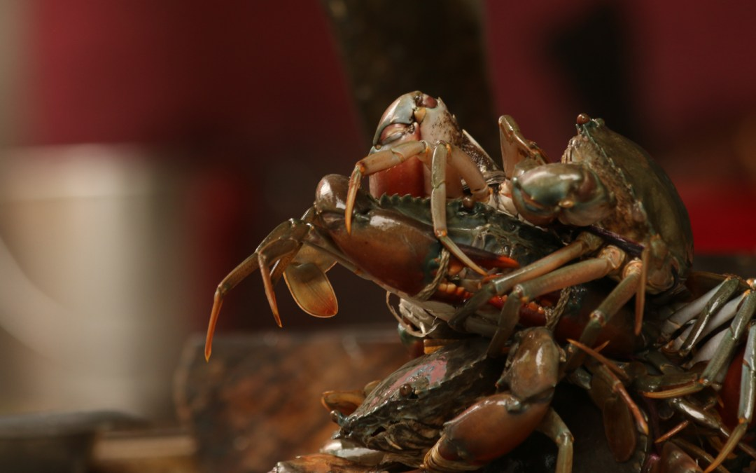Can Science Benefit Both Mud Crab and Local Fishers in the Sundarban?