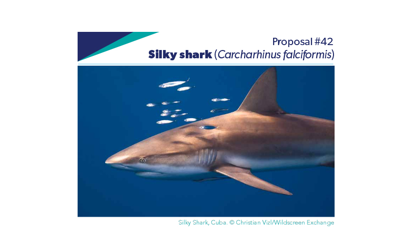 What #CITES4Sharks offers to the Bay of Bengal?