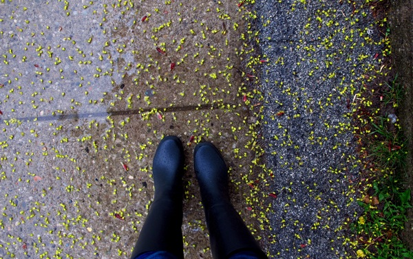 Photograph-Toronto-Ontario-Canada-Spring-Rain-Weather-Water
