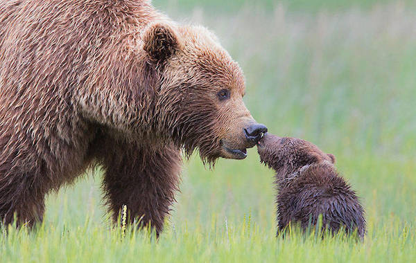 baby-photos-family-parents-bear-animals