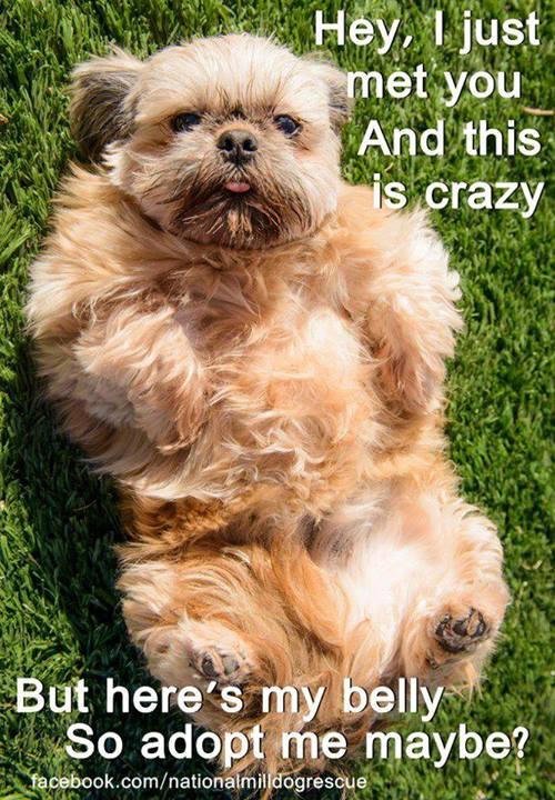 dog-belly-pet-adopt