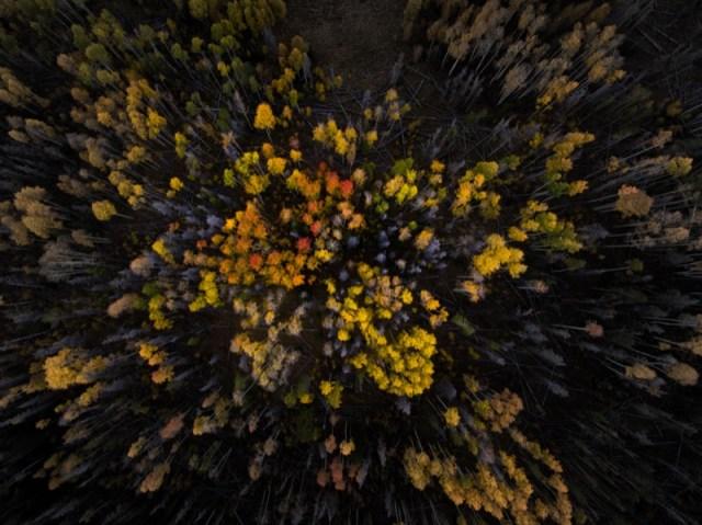 hedge-bush-trees-nature