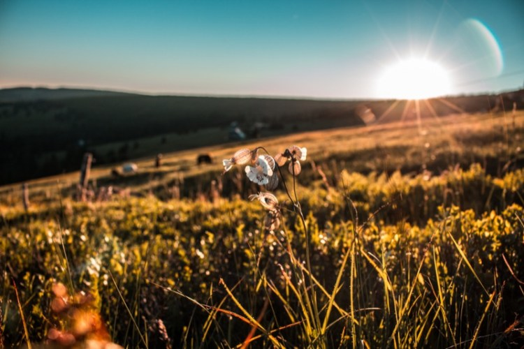 nature-zen-ray-of-sun