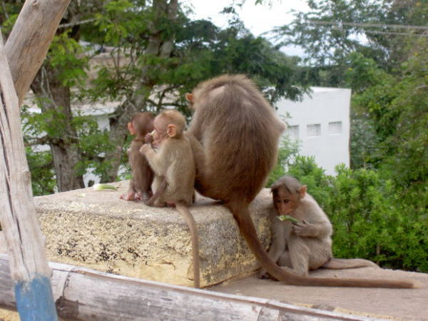 stock_monkey-mother-family-baby