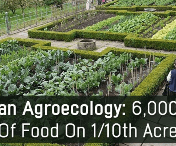 http://themindunleashed.com/2015/09/learn-how-this-family-grows-6000-lbs-of-food-on-just-110th-acre.html
