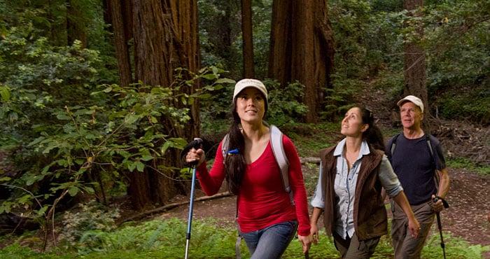 49 redwood parks,California redwood state parks , black friday, thanksgiving