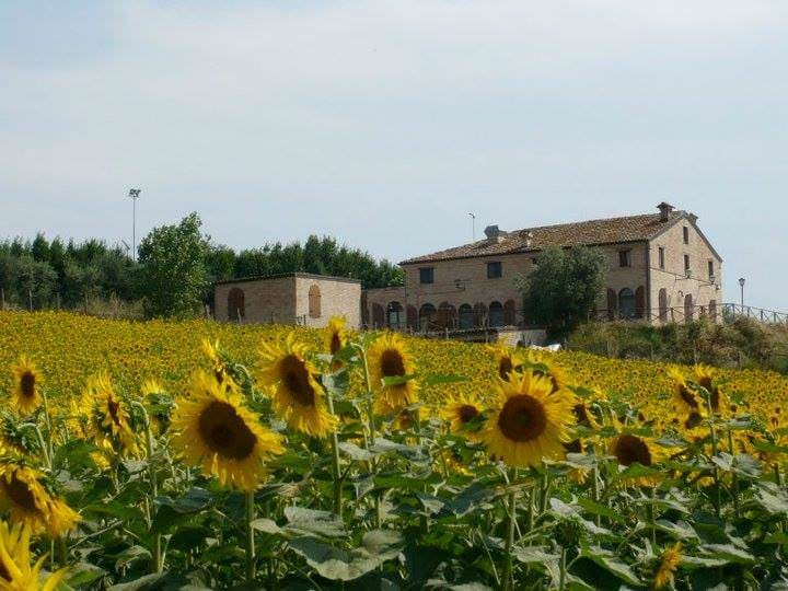 Champ de tournesols en Toscane