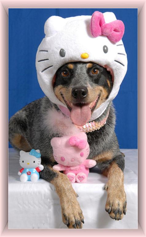 Dog Hello Kitty Hell