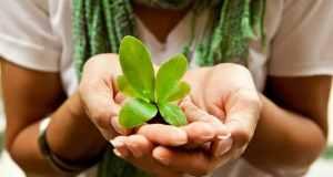 biljka u ruci