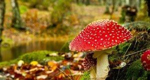 Gljive u vrtu