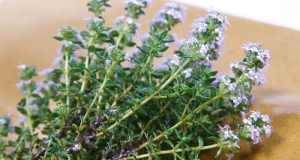 kako koristiti ljekovito bilje