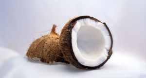 Šećer kokosove palme