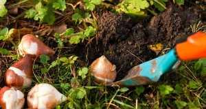 najbolji savjeti za vas vrt