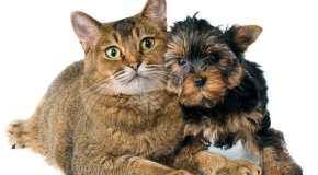 Kućni ljubimci i zdravlje