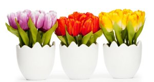 savjeti za uzgoj cvijeća
