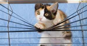 Otrovne biljke za mačke