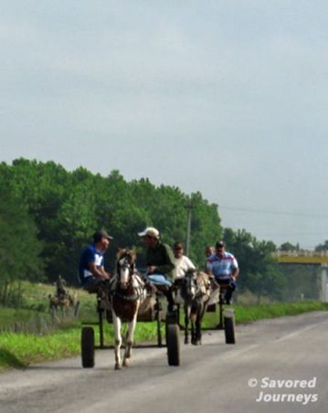 Sharing the road with more traditional forms of transportation