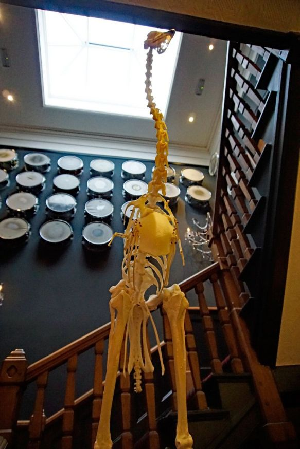 What hotel you've been to has a drum wall and dinosaur skeleton?