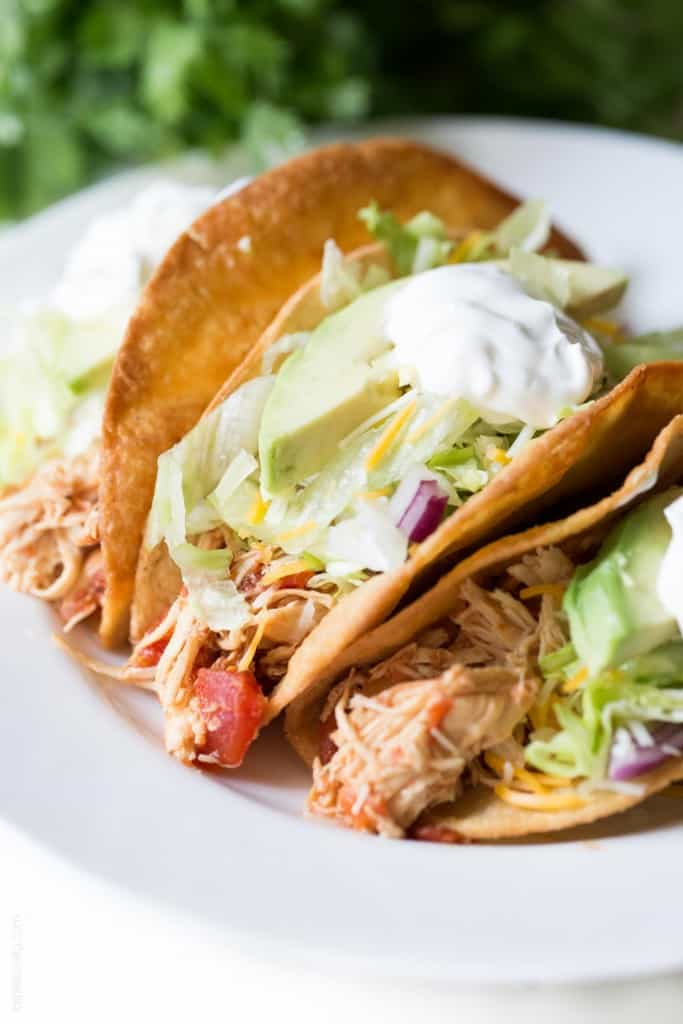 shredded chicken tacos on white plate