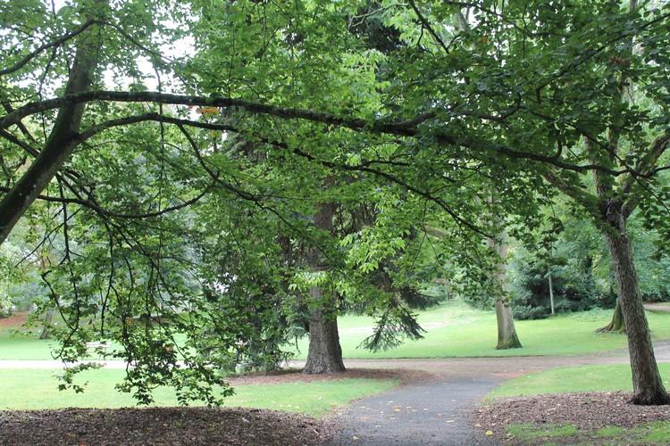 vichy arbres