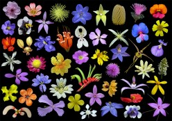 wildflowers are nice weeds savvy examiner
