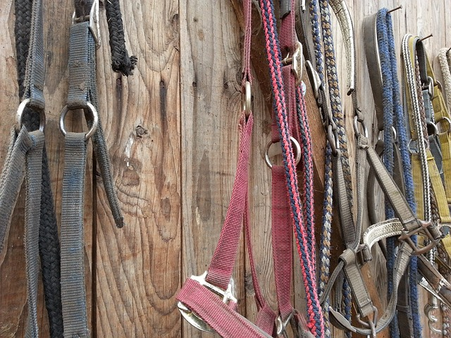 10 DIY Horse Barn and Tack Room Organization Ideas - Savvy Horsewoman