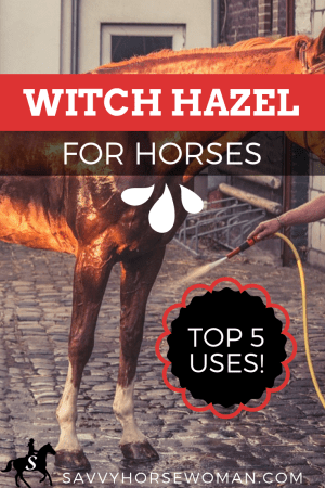 Witch Hazel for Horses - Top 5 Uses