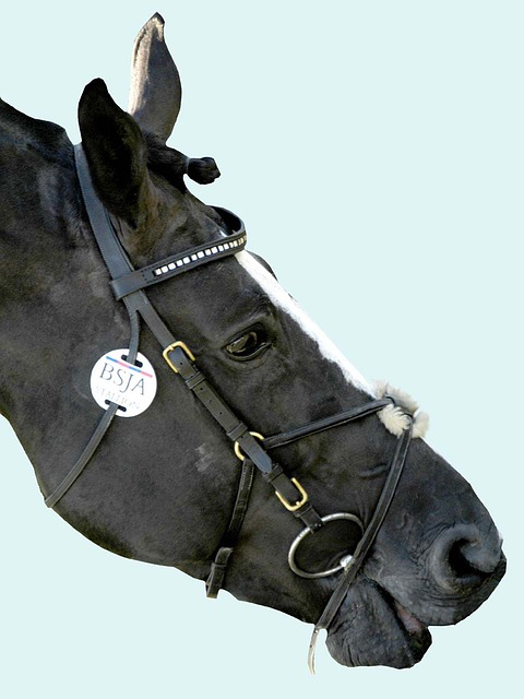 My Favorite Bits (and Why I Use Them)   Savvy Horsewoman