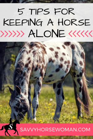 5 Tips for Keeping a Horse Alone by Savvy Horsewoman