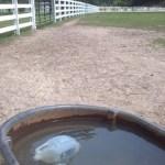 DIY Horse Care Tips