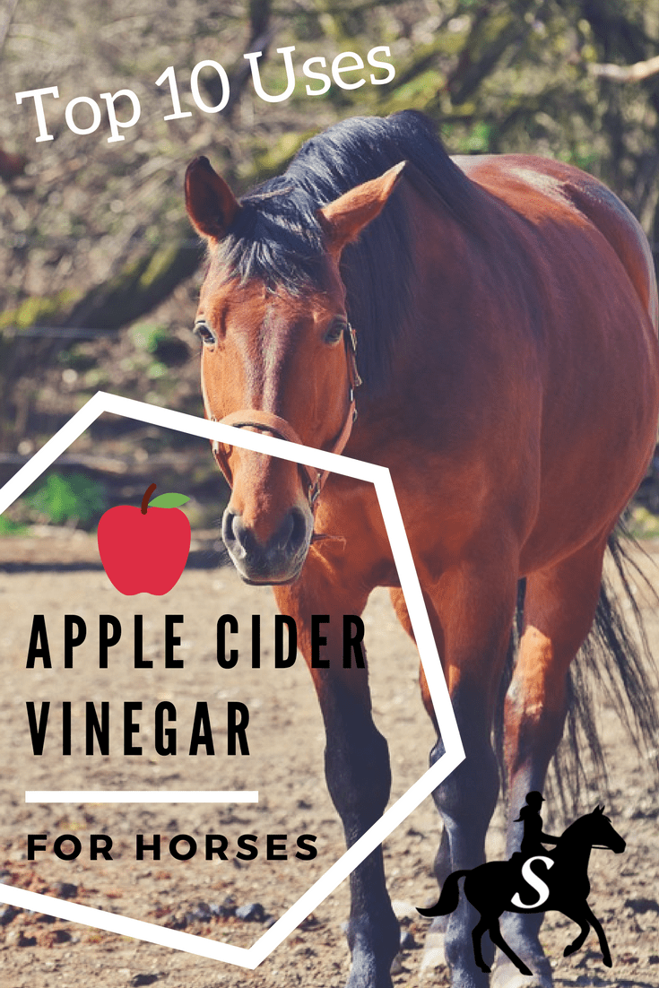 apple cider vinegar (ACV) for horses | diy horse care tips | natural horse care