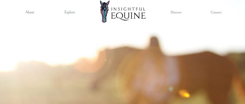 Insightful Equine - Top Equestrian and Horse Blogs to Follow - 2019