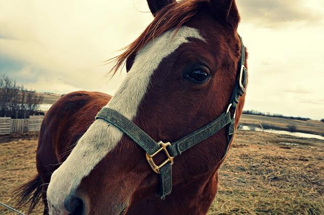 What You Should Know Before Buying a Horse | Horse Shopping | Savvy Horsewoman