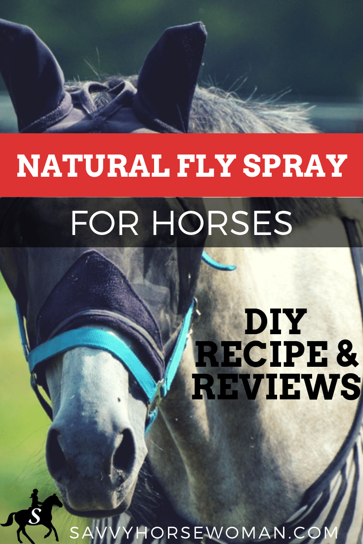 Natural Fly Spray for Horses - DIY Recipe and Reviews from Savvy Horsewoman