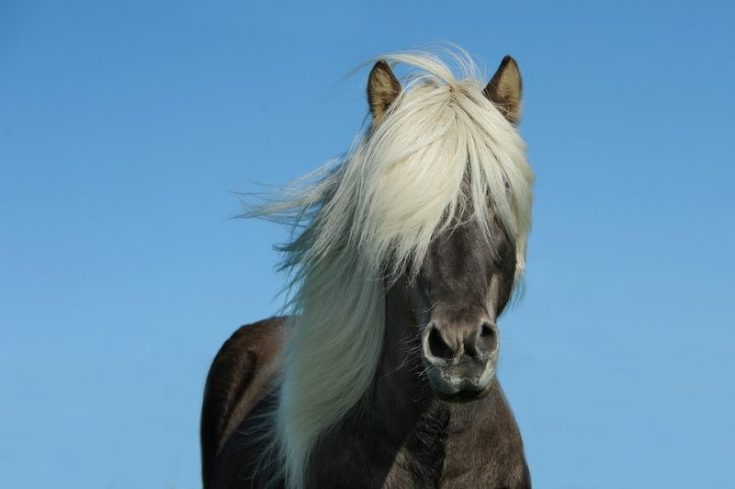 DIY Mane and Tail Growth Serum for Horses