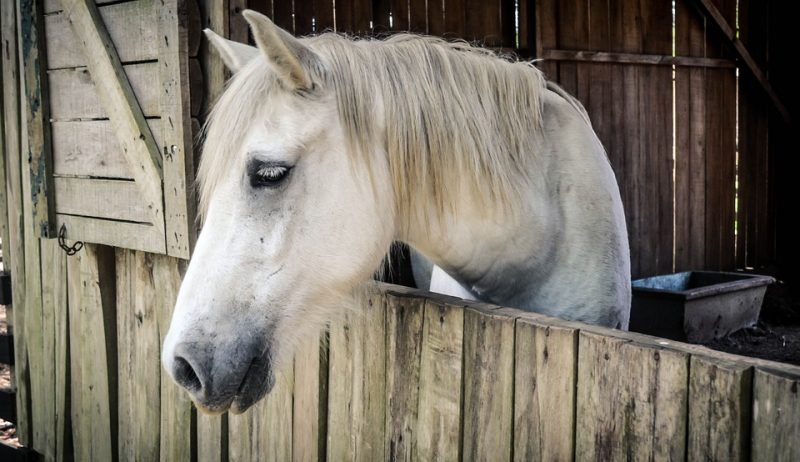 10 DIY Horse and Barn Hacks - Try Them Today!