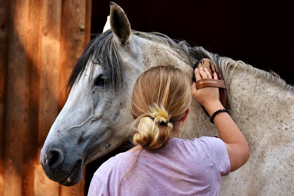 Choosing Horse Brushes | Horse Grooming | Horse Care | Savvy Horsewoman