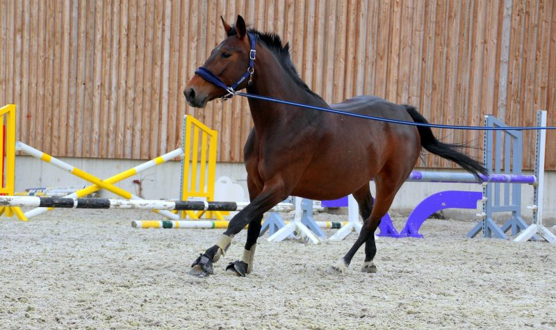 Lunging a Horse – Risks and Benefits