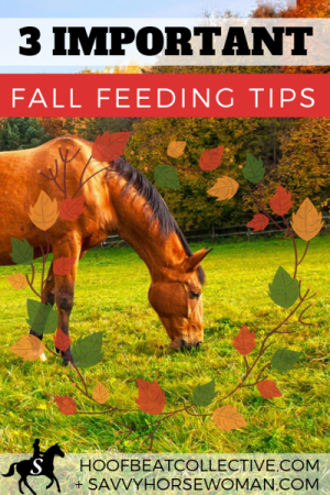 Horses in Autumn - 3 Important Fall Feeding Tips