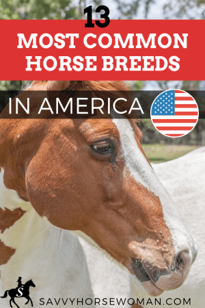 13 Common Horse Breeds in America - Savvy Horsewoman