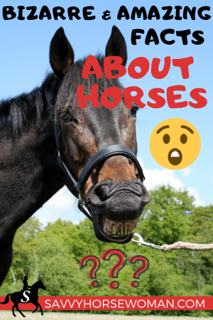 Did you know any of these bizarre horse facts? Test your knowledge!  #horsefacts #equestrian #horses #factsabouthorses