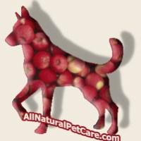 Dog or Horse Treat Recipe: Easy Crunchy Pumpkin Apple Cookies