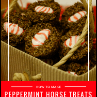DIY: How to Make Peppermint Horse Treats