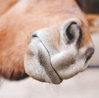 Homemade Horse Treats with 4 Ingredients
