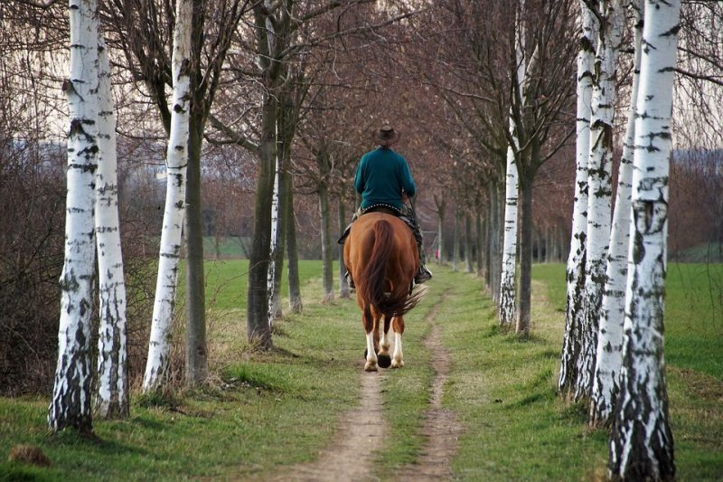 Horseback Riding After Retirement – It's Never Too Late!