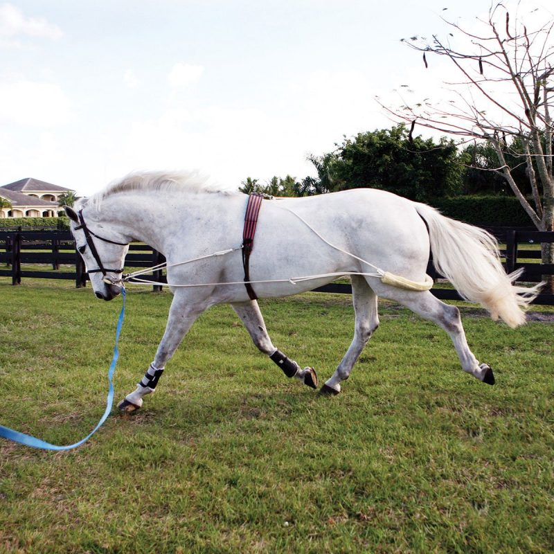 What is a Pessoa Lunging System and How to Use It