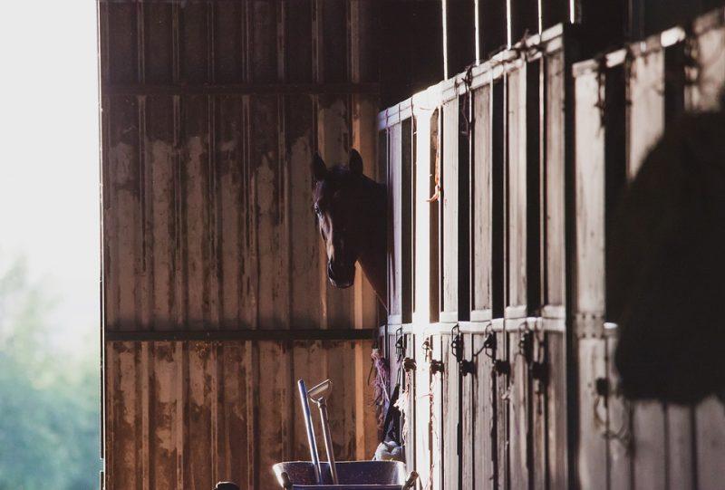 Horse Cost Case Study: November 2019 Update